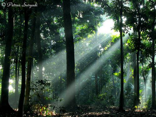 Luas hutan indonesia di tiap provinsi ini merupakan data luas hutan