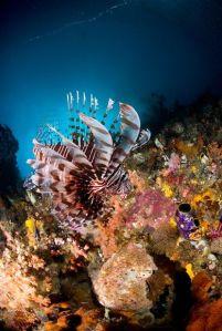 keindahan alam laut Indonesia